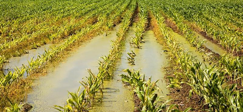 水肥一体化施肥技术要点