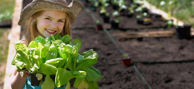 蔬菜长势不齐怎么办?最给力的补救措施超给力!